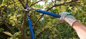 tree pruning coquitlam