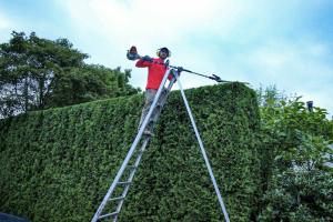cedar hedge trimming coquitlam