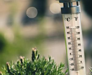 heatwave plants vancouver